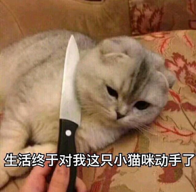 生活终于对这只小猫咪下手了!.jpg